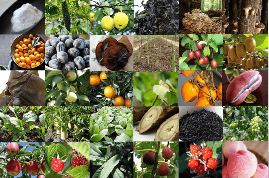 天然植物酵素素材を70種類配合
