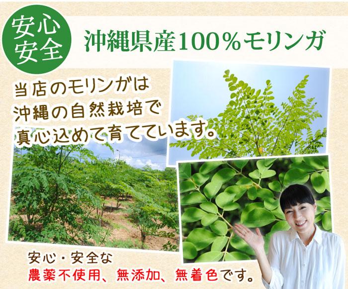 沖縄県産100%モリンガ