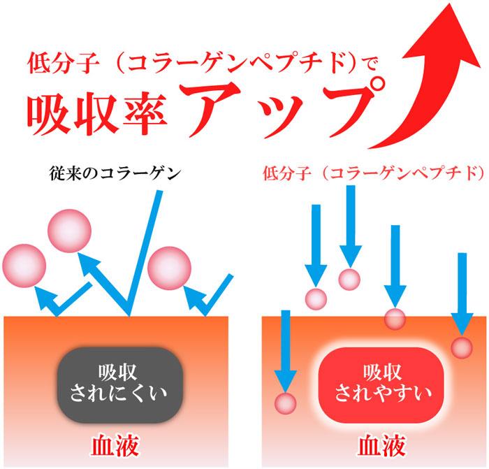 低分子(コラーゲンペプチド)で吸収率アップ